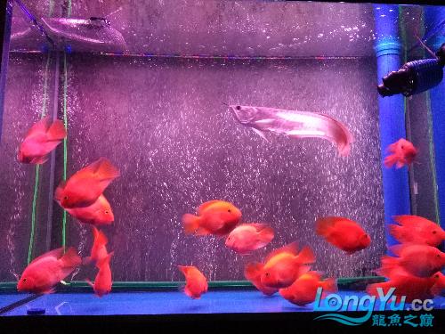 大家看看如何 观赏鱼常见疾病 南通水族批发市场第3张