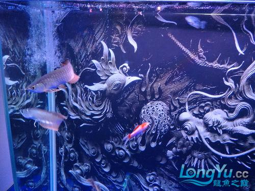 额头又南通观赏鱼缸订做亮了一点,有机会露头啊 观赏鱼常见疾病 南通水族批发市场第2张