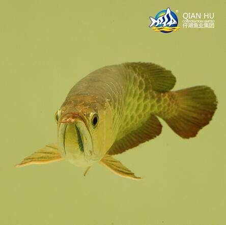 龙鱼1.jpg