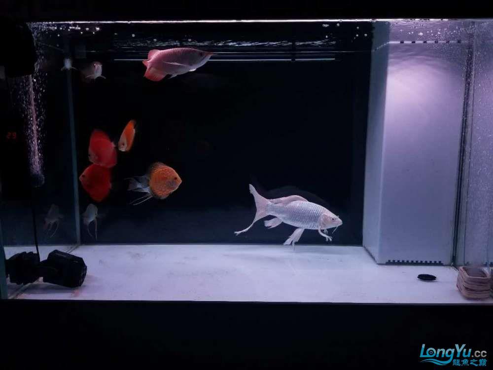 天津鱼缸价格我的小白条呀,大神进 天津观赏鱼 天津龙鱼第3张