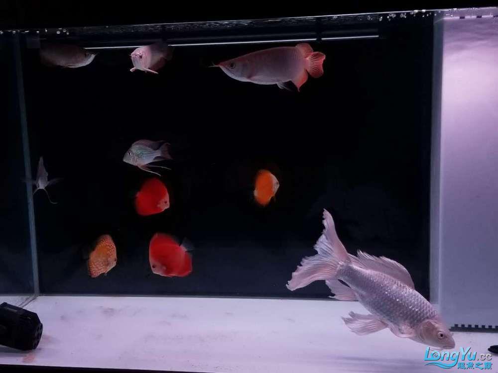 天津鱼缸价格我的小白条呀,大神进 天津观赏鱼 天津龙鱼第4张