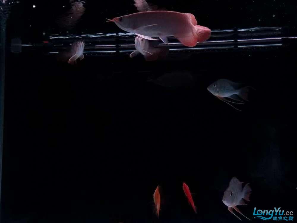 天津鱼缸价格我的小白条呀,大神进 天津观赏鱼 天津龙鱼第6张