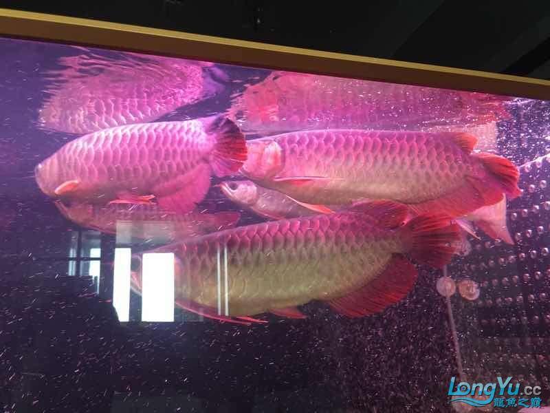 一缸凶狠的美物 太原龙鱼论坛 太原龙鱼第6张