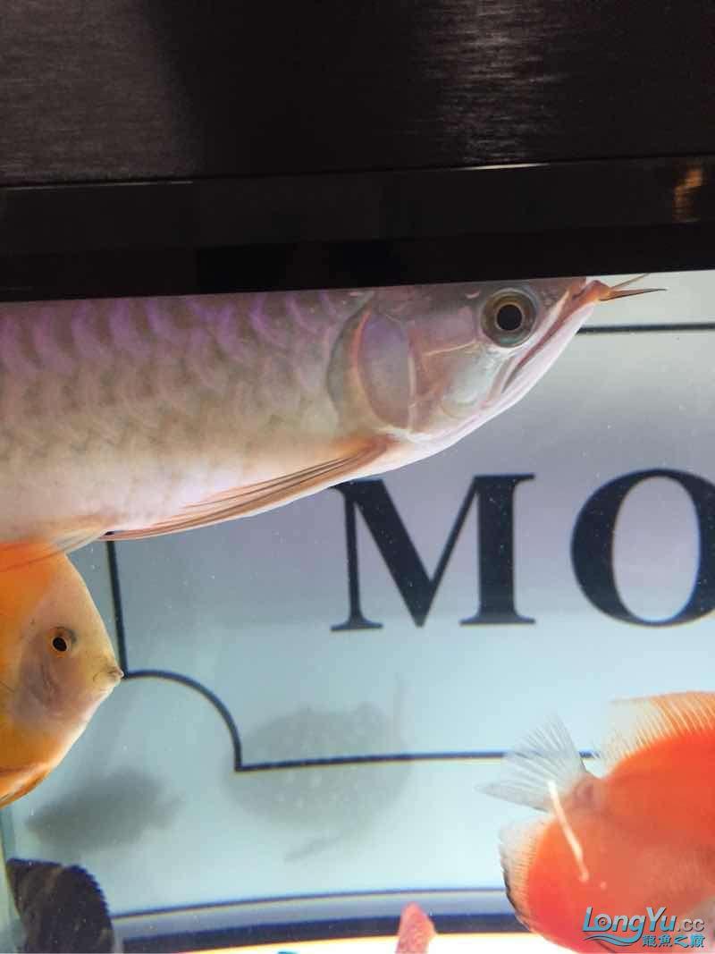 更新一下大家庭 南充观赏鱼 南充水族批发市场第1张