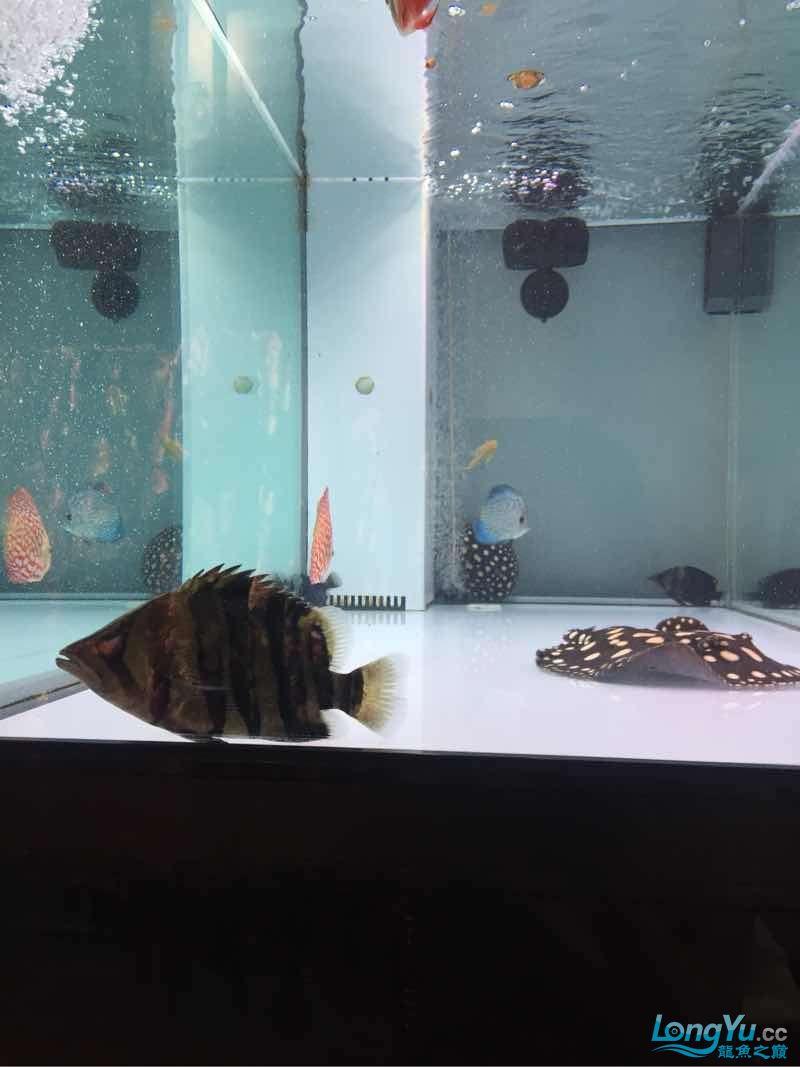 更新一下大家庭 南充观赏鱼 南充水族批发市场第5张