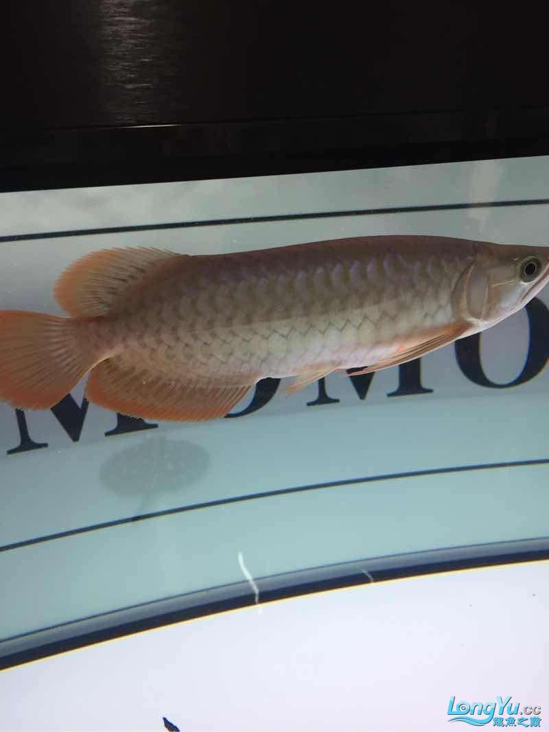 更新一下大家庭 南充观赏鱼 南充水族批发市场第7张