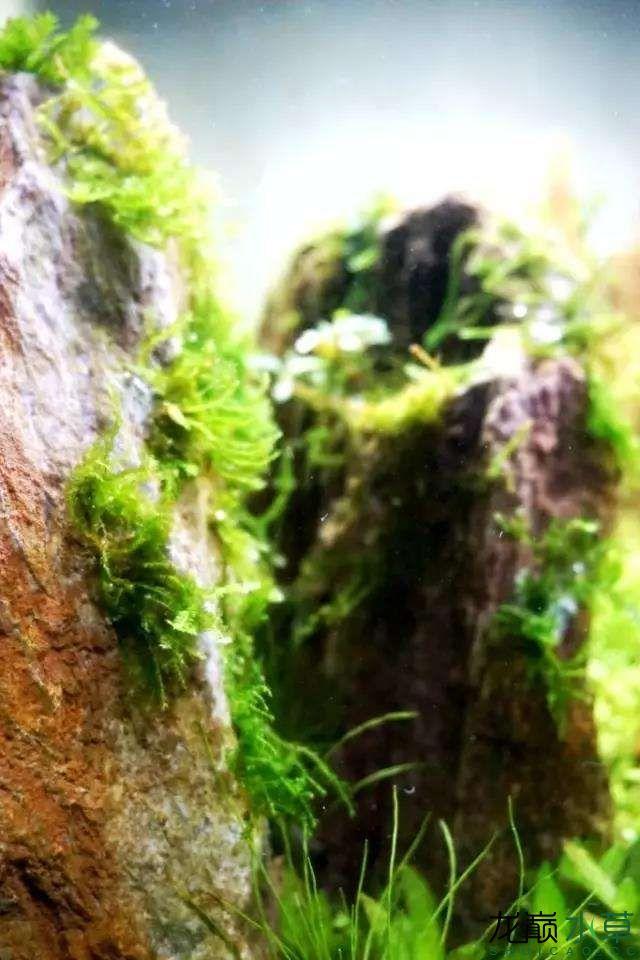 转载花树Waiting For You颠覆你对水族造景中树的印象 济南龙鱼论坛 济南龙鱼第25张