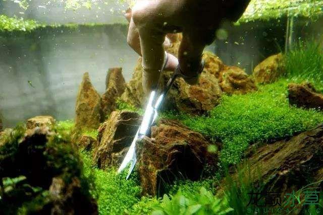 转载花树Waiting For You颠覆你对水族造景中树的印象 济南龙鱼论坛 济南龙鱼第28张