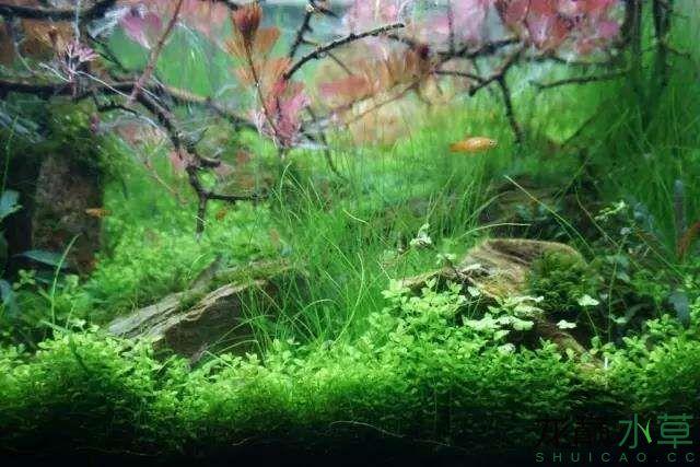 转载花树Waiting For You颠覆你对水族造景中树的印象 济南龙鱼论坛 济南龙鱼第43张