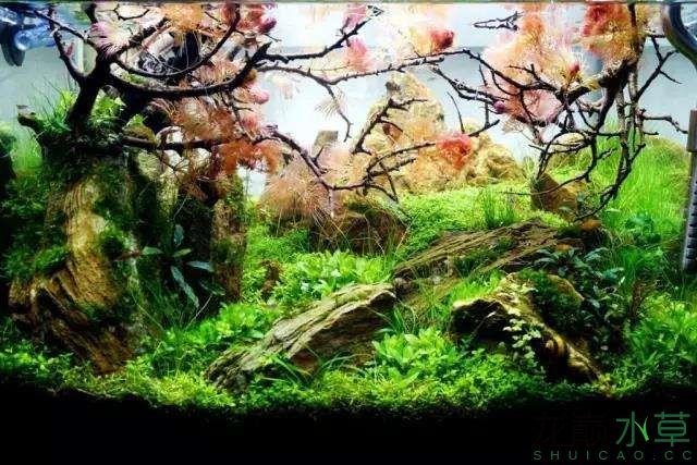 转载花树Waiting For You颠覆你对水族造景中树的印象 济南龙鱼论坛 济南龙鱼第51张