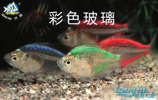 彩色玻璃鱼.jpg