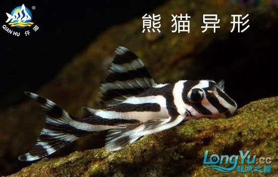 熊猫异形L46.jpg