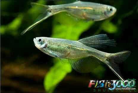 猜猜这是两种什么鱼