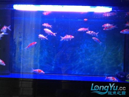 西宁哪个水族店卖女王大帆池入缸 西宁观赏鱼 西宁龙鱼第2张
