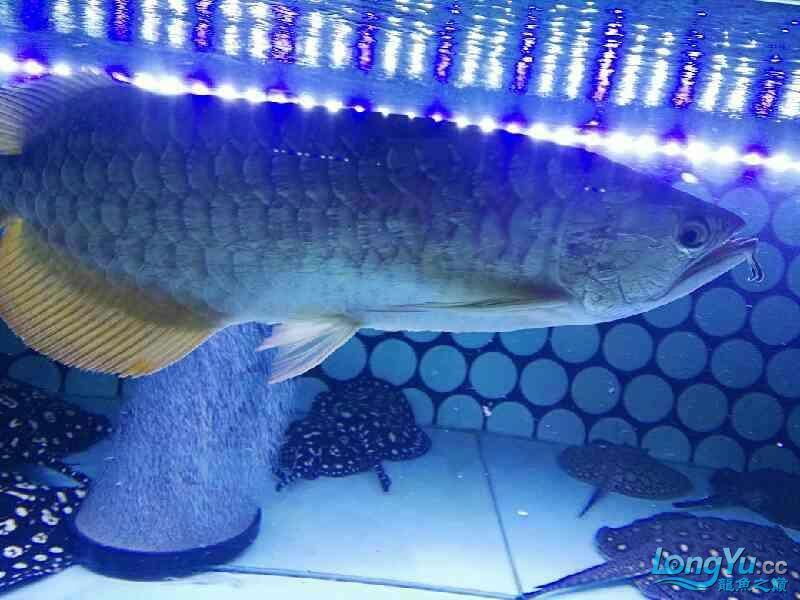 天津红箭小型热带鱼图求助啊!大神们帮忙看看什么问题!