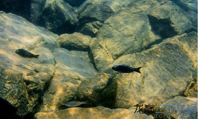 哈尔滨二手鱼缸感受原生地的神秘 哈尔滨水族批发市场 哈尔滨龙鱼第9张