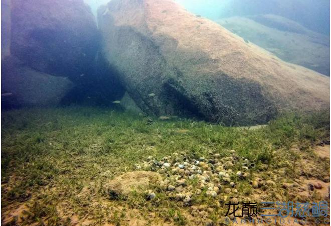 哈尔滨二手鱼缸感受原生地的神秘 哈尔滨水族批发市场 哈尔滨龙鱼第7张