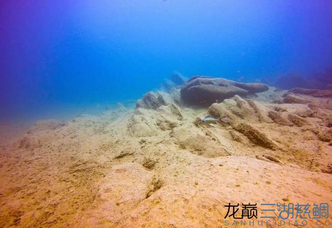 哈尔滨二手鱼缸感受原生地的神秘 哈尔滨水族批发市场 哈尔滨龙鱼第5张