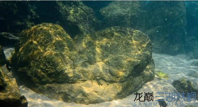 哈尔滨二手鱼缸感受原生地的神秘 哈尔滨水族批发市场 哈尔滨龙鱼第3张