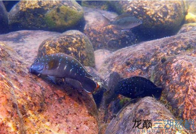 哈尔滨二手鱼缸感受原生地的神秘 哈尔滨水族批发市场 哈尔滨龙鱼第2张
