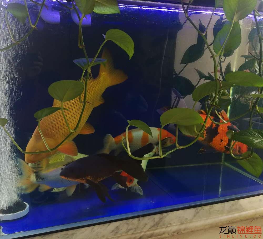 拍照留念换个一吨的地缸 深圳龙鱼论坛 深圳龙鱼第2张