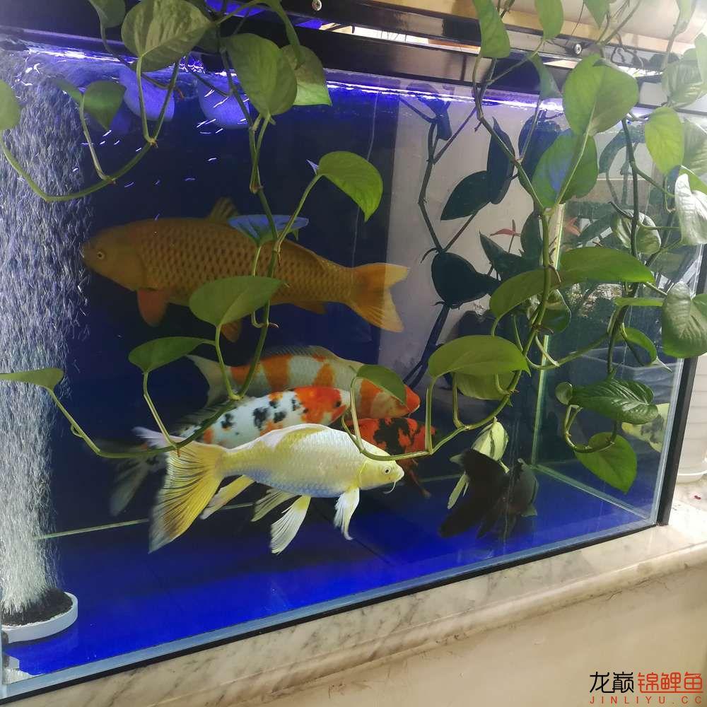 拍照留念换个一吨的地缸 深圳龙鱼论坛 深圳龙鱼第1张