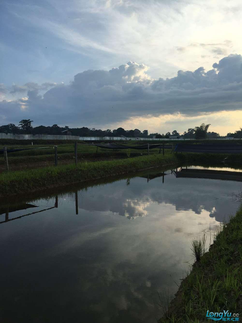 天王印尼渔场(印尼-大湖)
