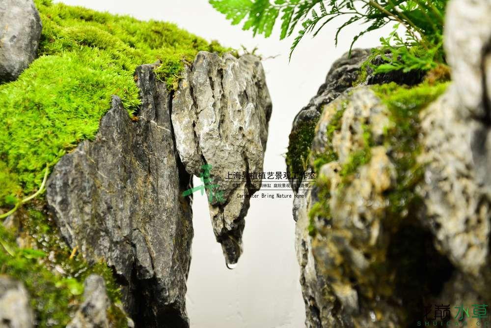 45焦作水陆3.jpg