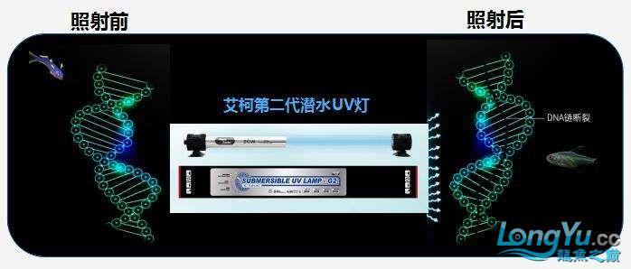 艾洁百能UV灯.jpg