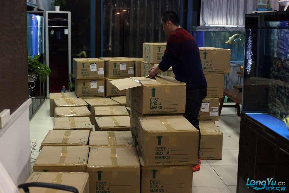 王者归来记录李亚四古典龙鱼到货 郑州水族批发市场 郑州龙鱼第2张