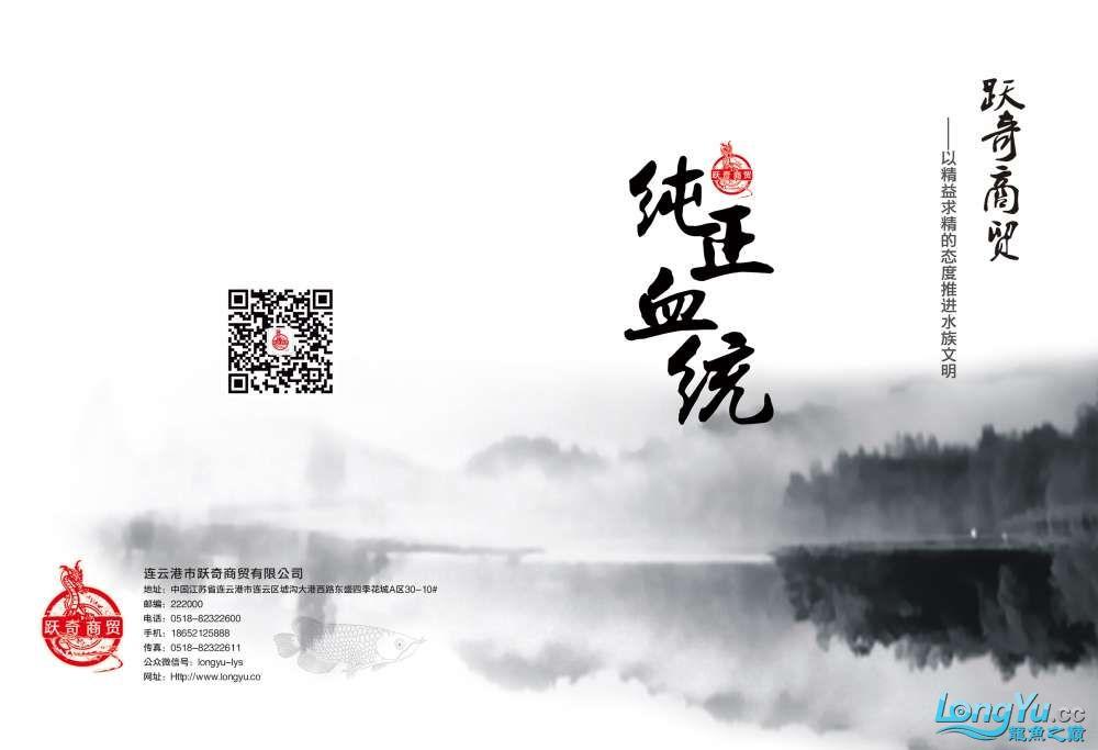 王者归来记录李亚四古典龙鱼到货 郑州水族批发市场 郑州龙鱼第43张