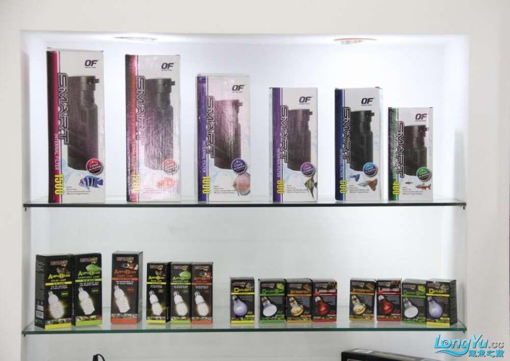 石家庄哪里买鱼缸的市场2017上海CIPS展之不可错过的瞬间 石家庄水族批发市场 石家庄龙鱼第6张