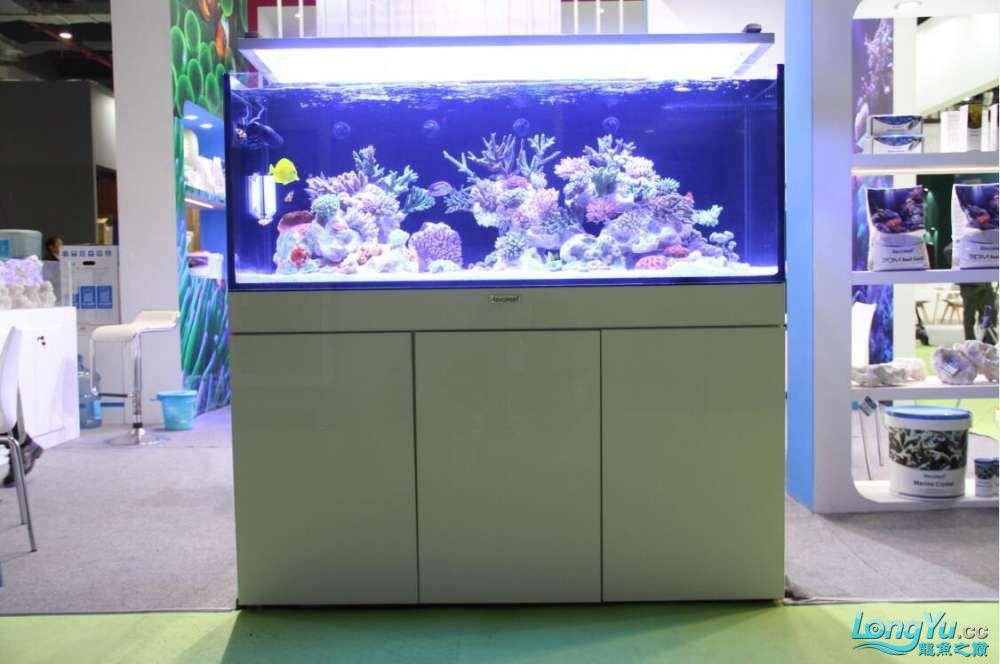 石家庄哪里买鱼缸的市场2017上海CIPS展之不可错过的瞬间 石家庄水族批发市场 石家庄龙鱼第45张