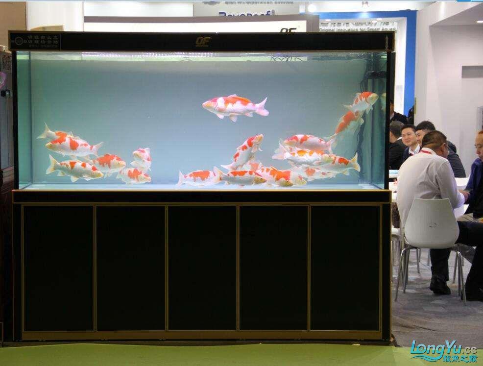 石家庄哪里买鱼缸的市场2017上海CIPS展之不可错过的瞬间 石家庄水族批发市场 石家庄龙鱼第41张