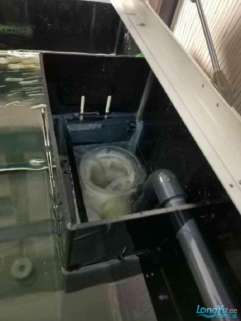 方型溢流底过滤鱼缸共性问题 榆林水族批发市场 榆林水族批发市场第4张