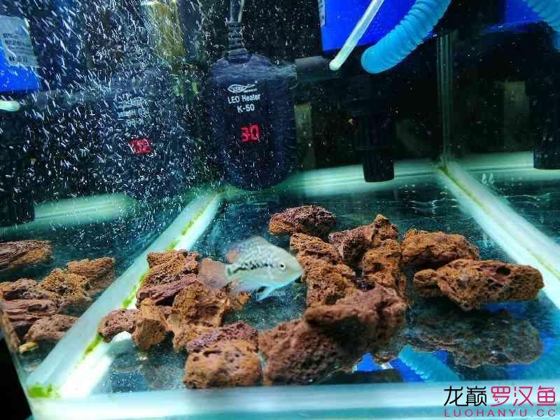 小罗到家两个月整 榆林水族批发市场 榆林水族批发市场第9张