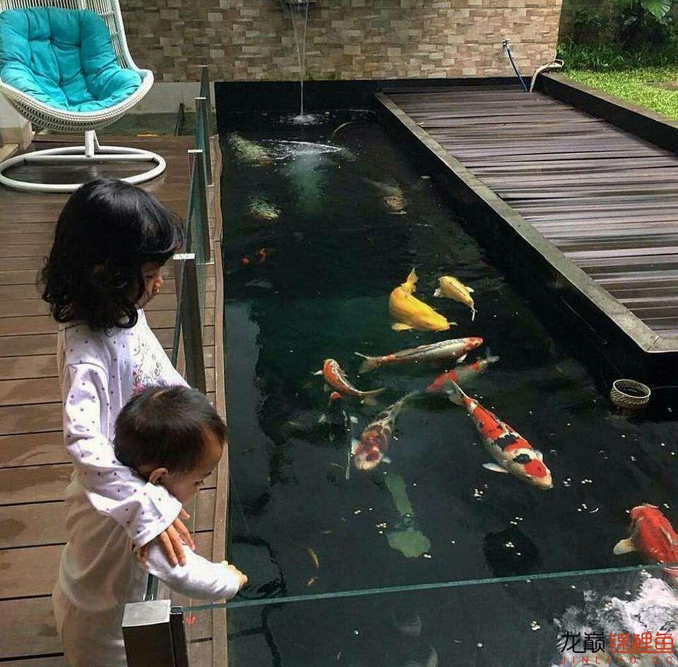 太原大帆今天发些不一样的赏鱼要从娃娃抓起 太原龙鱼论坛 太原龙鱼第36张