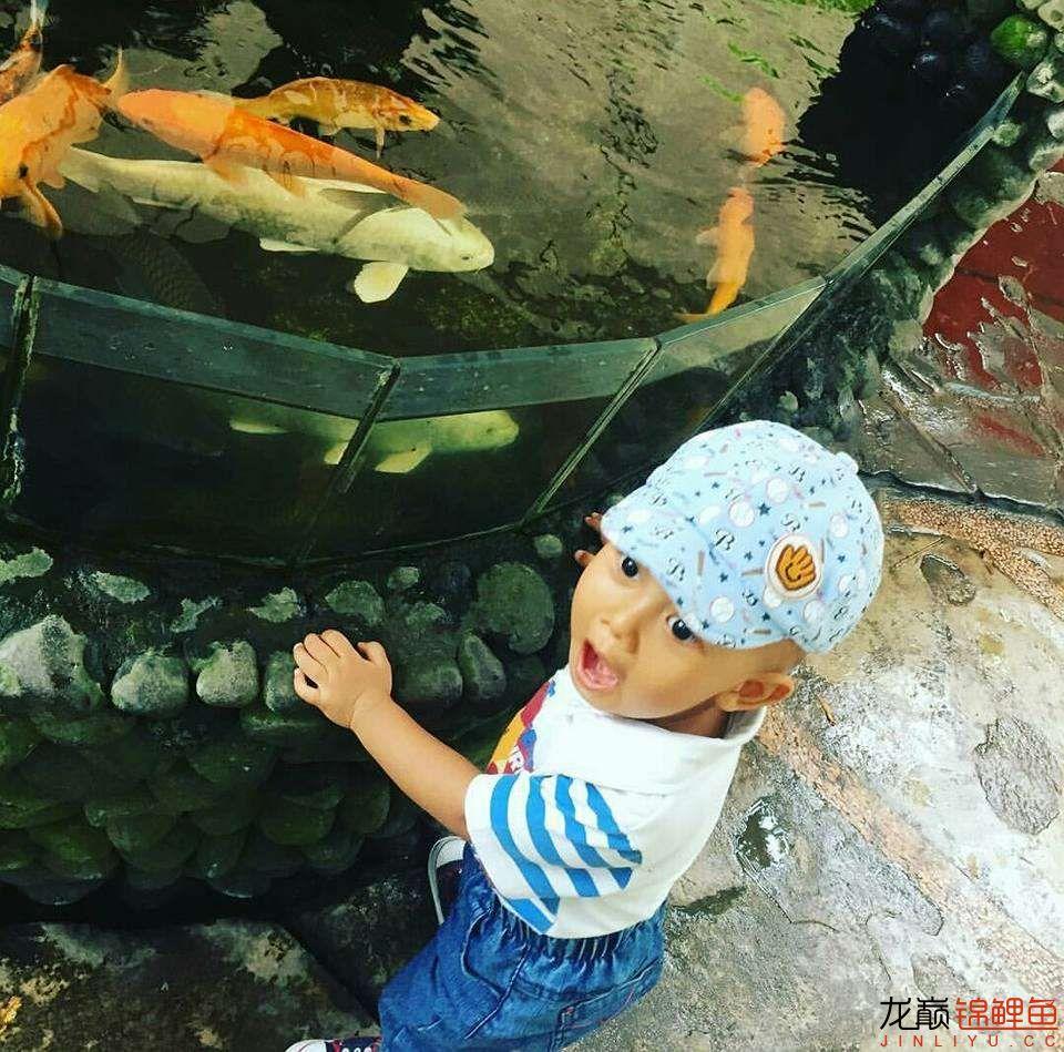 太原大帆今天发些不一样的赏鱼要从娃娃抓起 太原龙鱼论坛 太原龙鱼第34张