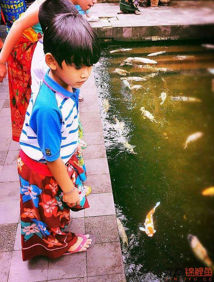 太原大帆今天发些不一样的赏鱼要从娃娃抓起 太原龙鱼论坛 太原龙鱼第33张