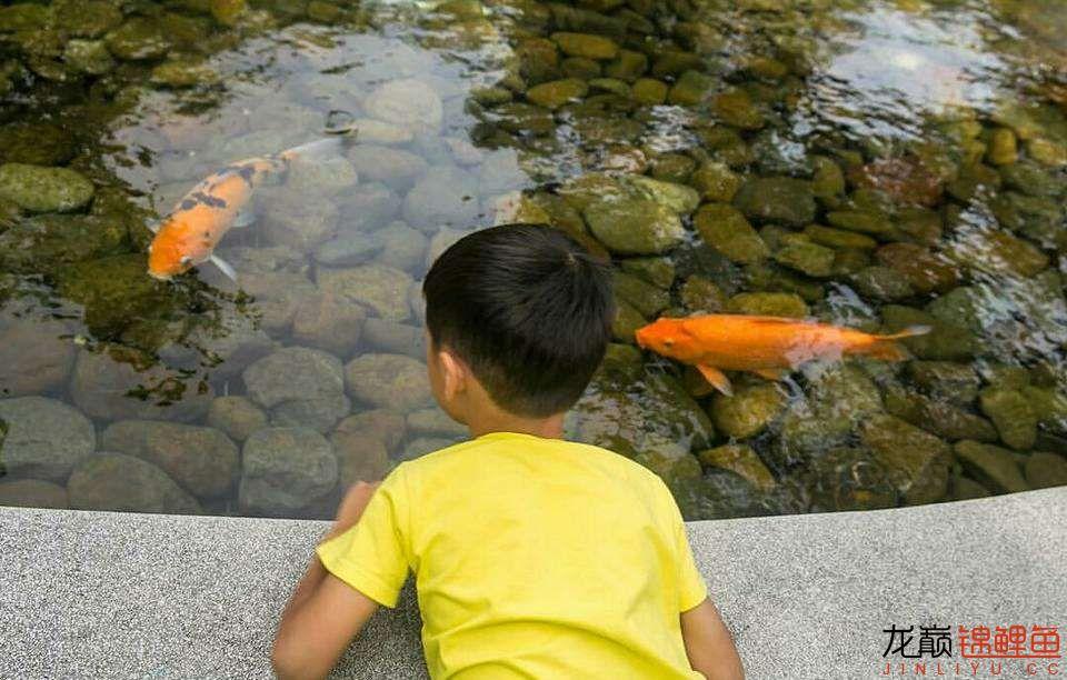太原大帆今天发些不一样的赏鱼要从娃娃抓起 太原龙鱼论坛 太原龙鱼第32张