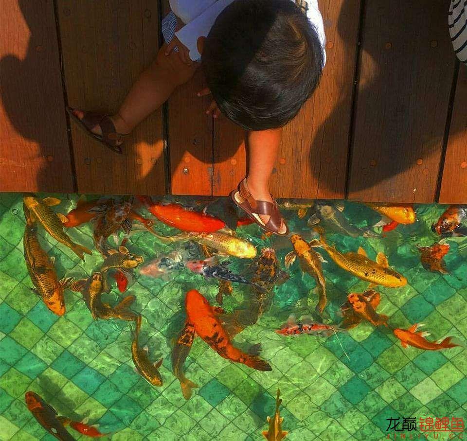 太原大帆今天发些不一样的赏鱼要从娃娃抓起 太原龙鱼论坛 太原龙鱼第30张