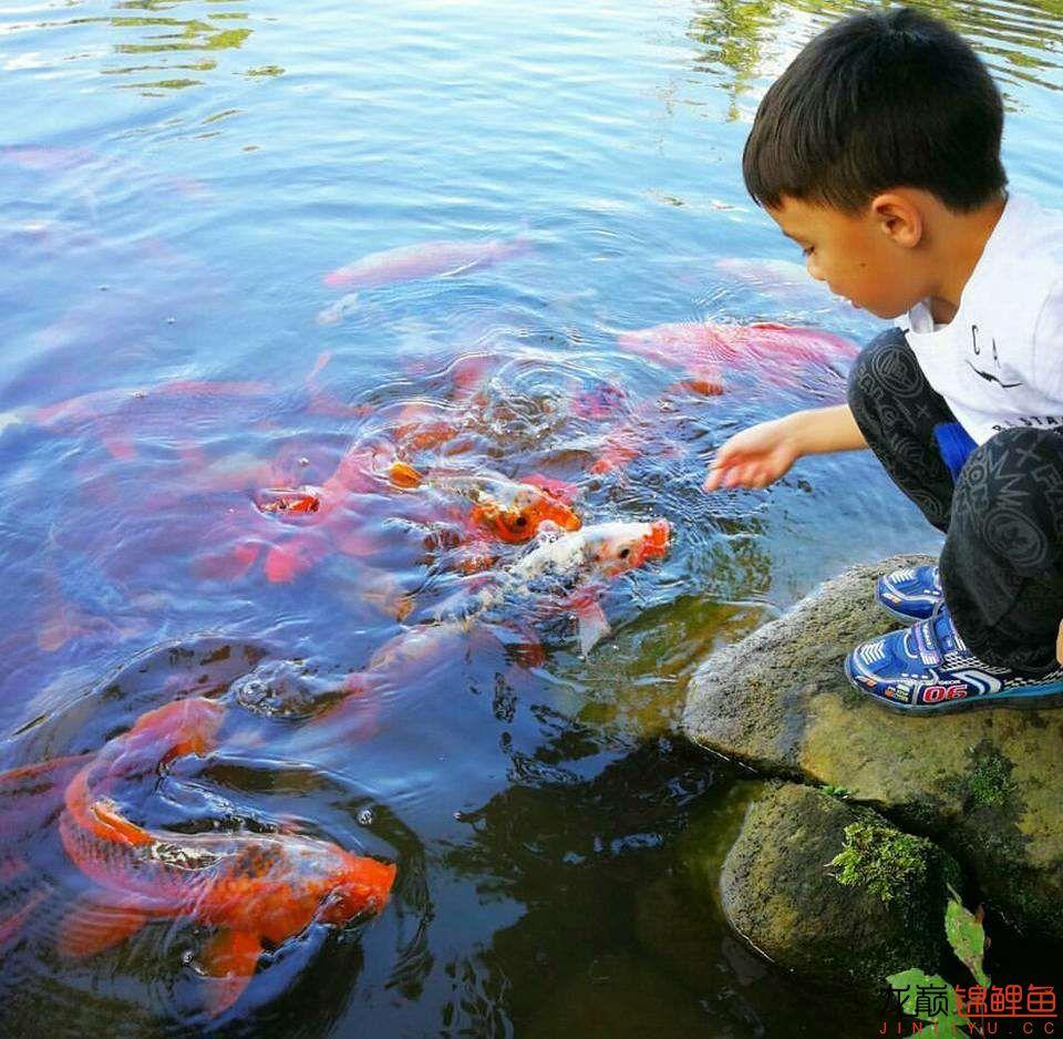 太原大帆今天发些不一样的赏鱼要从娃娃抓起 太原龙鱼论坛 太原龙鱼第27张