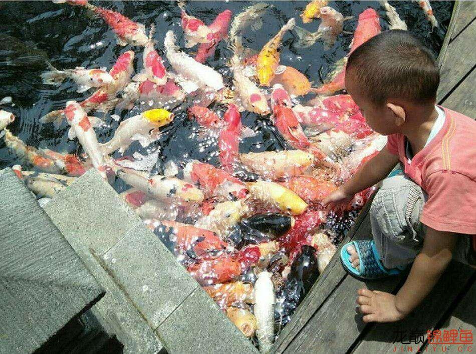 太原大帆今天发些不一样的赏鱼要从娃娃抓起 太原龙鱼论坛 太原龙鱼第20张