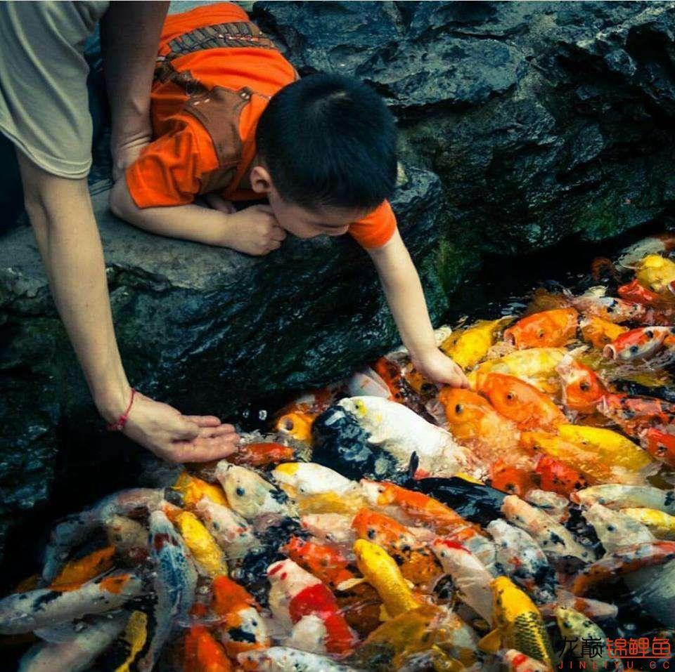 太原大帆今天发些不一样的赏鱼要从娃娃抓起 太原龙鱼论坛 太原龙鱼第19张