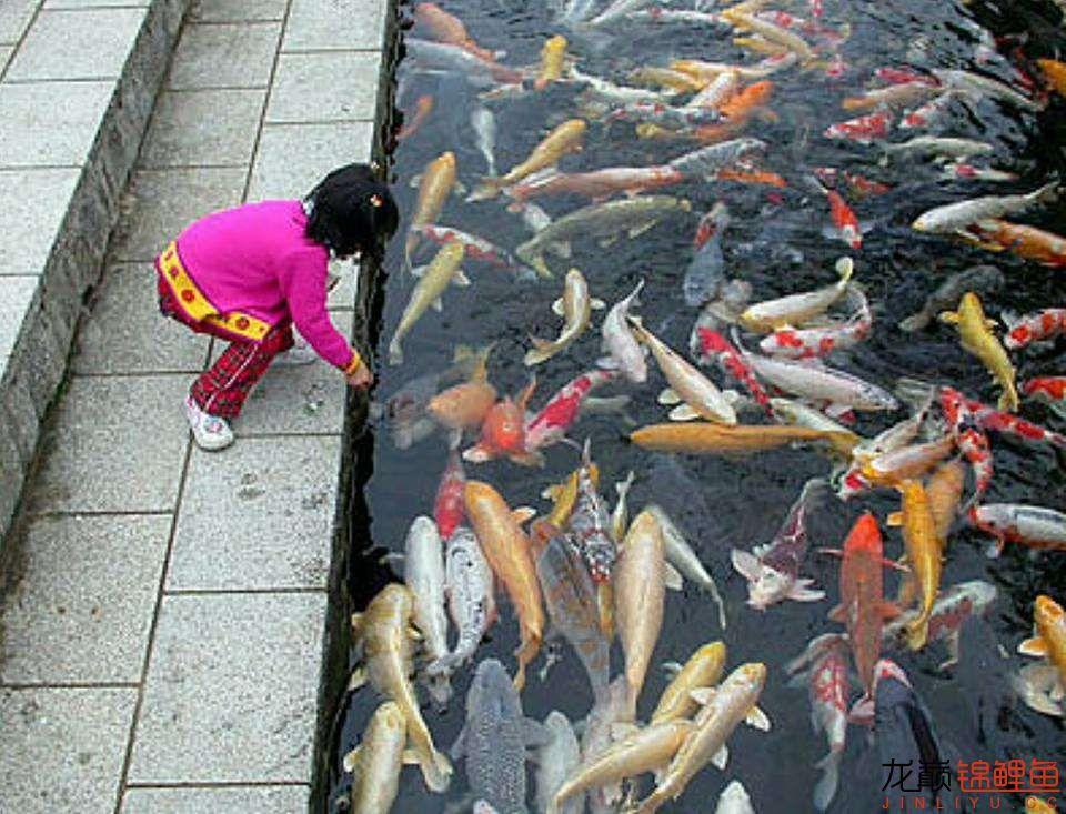 太原大帆今天发些不一样的赏鱼要从娃娃抓起 太原龙鱼论坛 太原龙鱼第13张