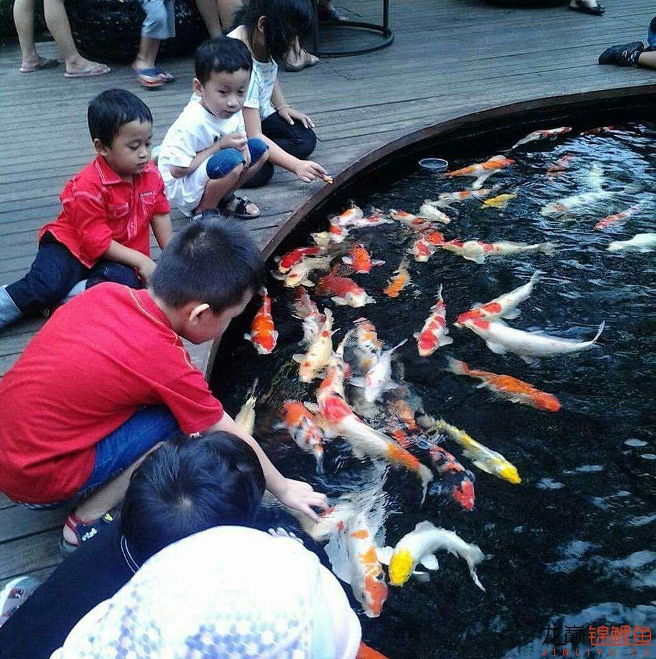 太原大帆今天发些不一样的赏鱼要从娃娃抓起 太原龙鱼论坛 太原龙鱼第11张
