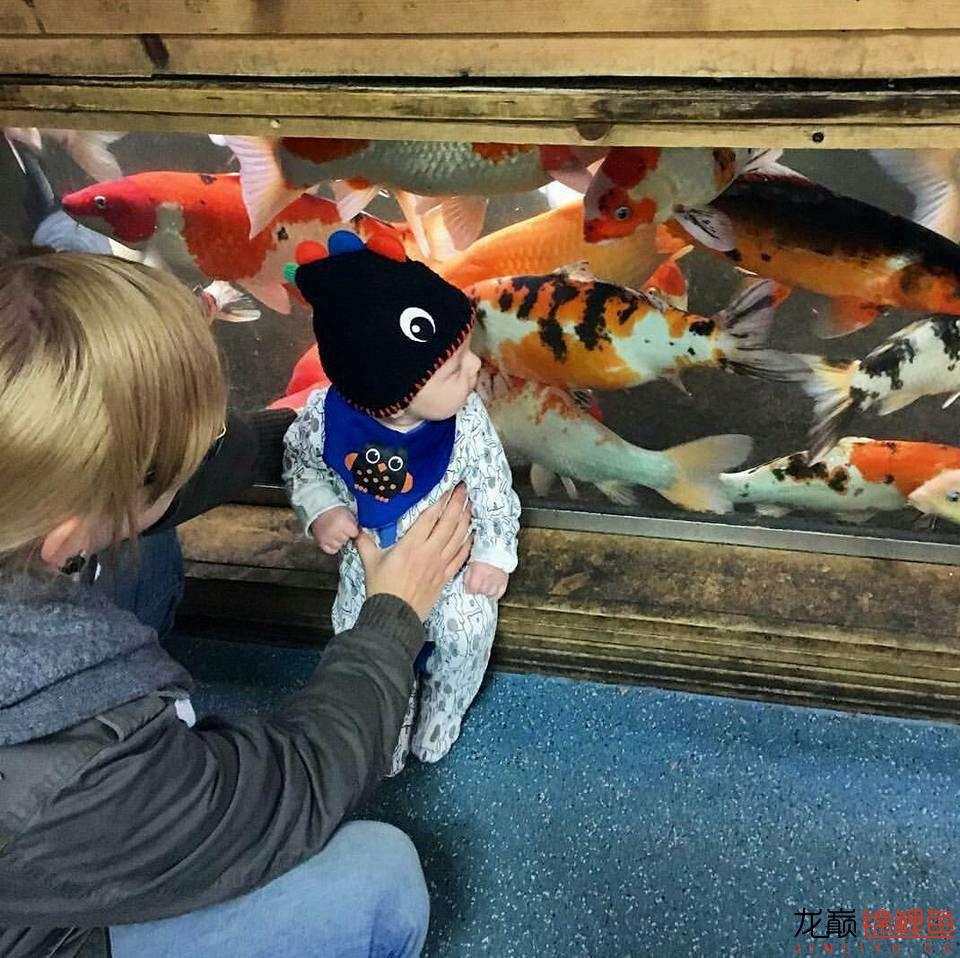 太原大帆今天发些不一样的赏鱼要从娃娃抓起 太原龙鱼论坛 太原龙鱼第2张