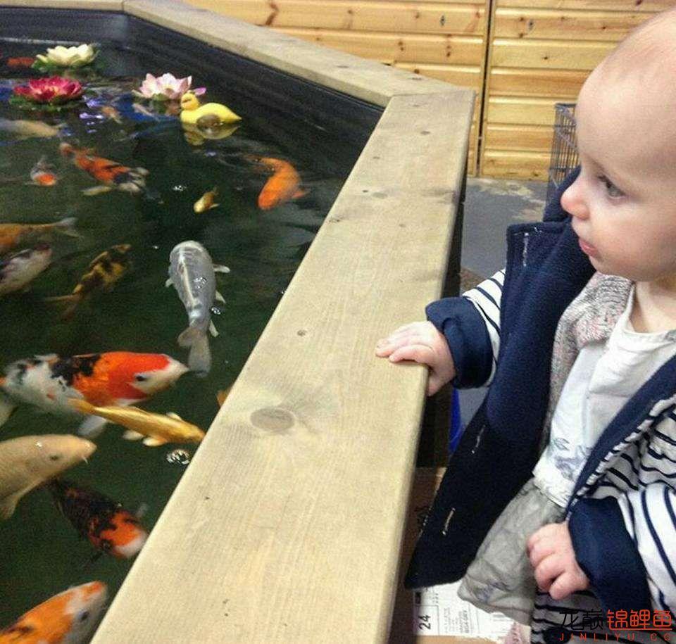 太原大帆今天发些不一样的赏鱼要从娃娃抓起 太原龙鱼论坛 太原龙鱼第9张