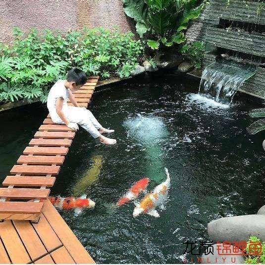 太原大帆今天发些不一样的赏鱼要从娃娃抓起 太原龙鱼论坛 太原龙鱼第7张