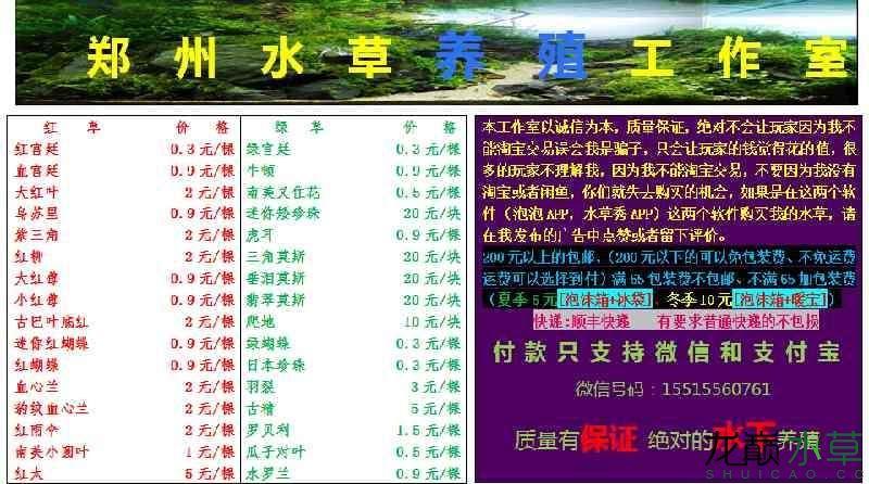 榆林哪个水族店有财神鹦鹉郑州水草养殖工作室出售水草